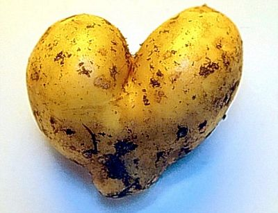 Vỏ khoai tây rất nhiều chất dinh dưỡng như chất xơ, kali, sắt, phốt pho, ...
